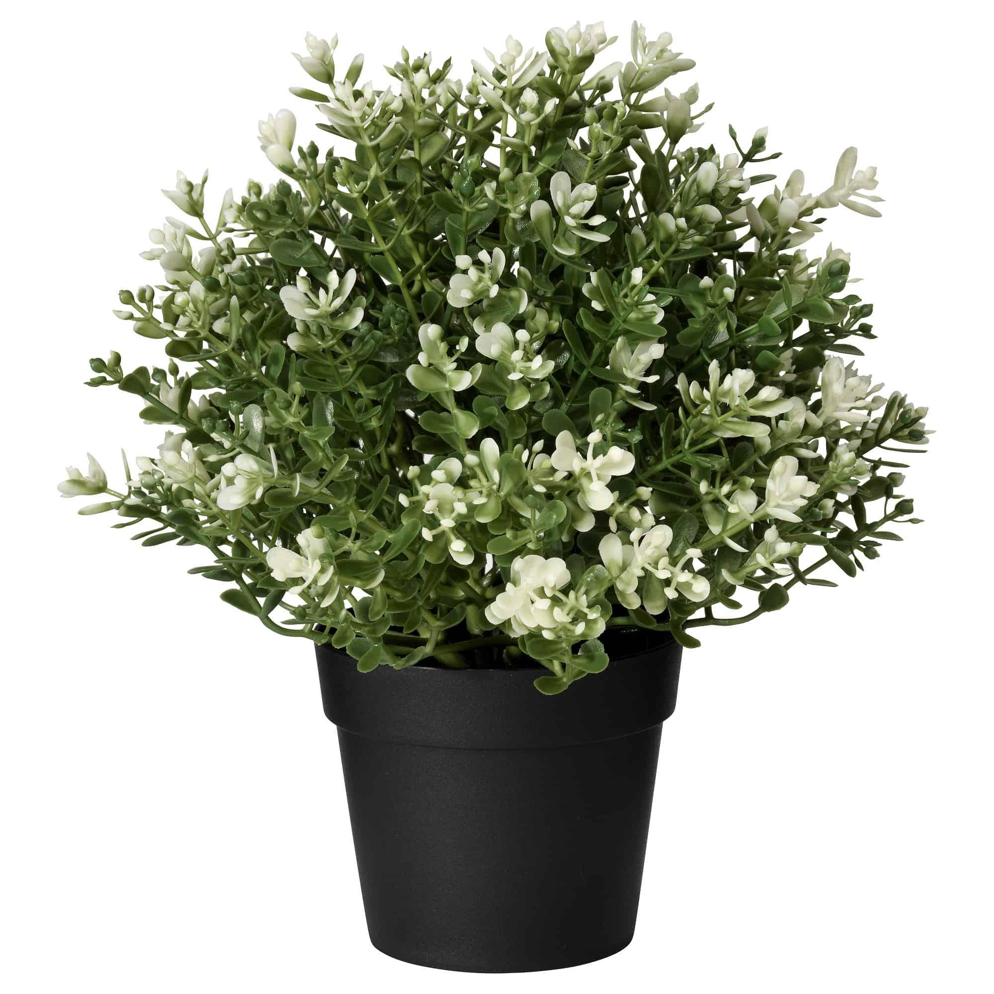 IKEA FEJKA thyme plant
